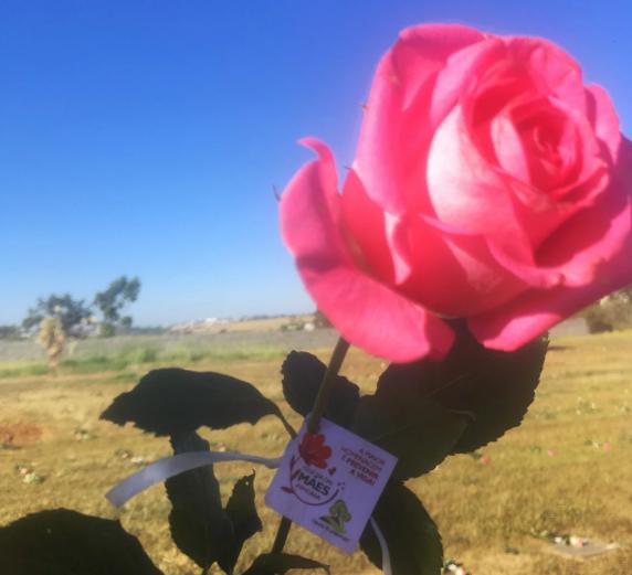 Com prevenção, o Dia das Mães #EmCasa foi repleto de homenagens